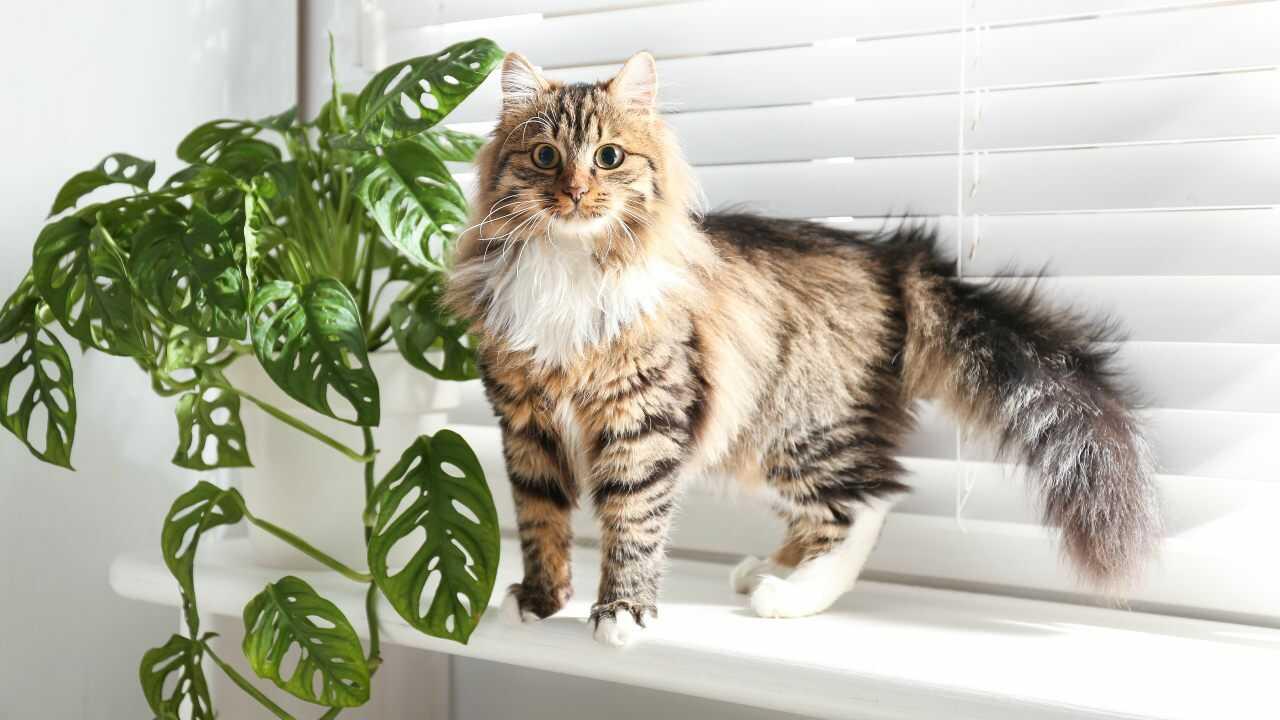 arricchimento olfattivo gatto