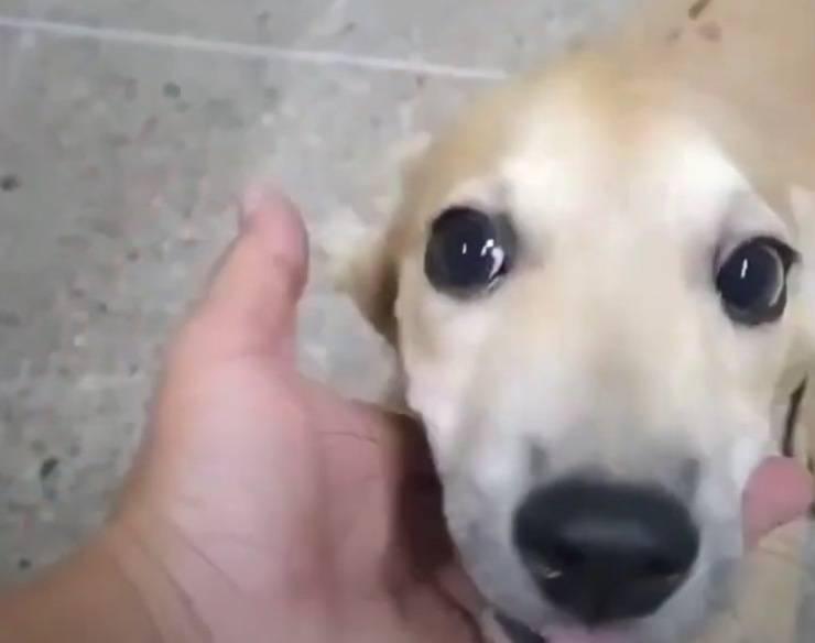 cagnolini cibo bagno sette giorni