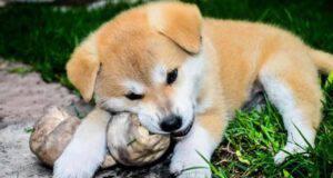 Ossa di pelle per cani