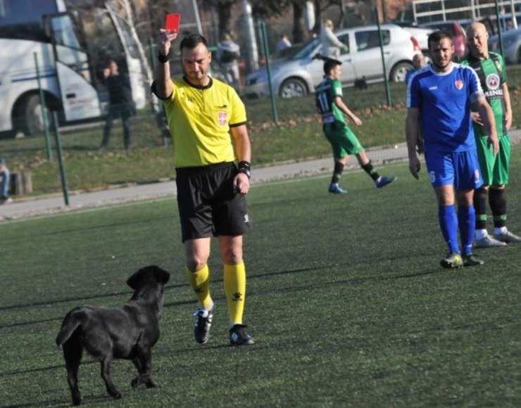 cagnolino espulso arbitro