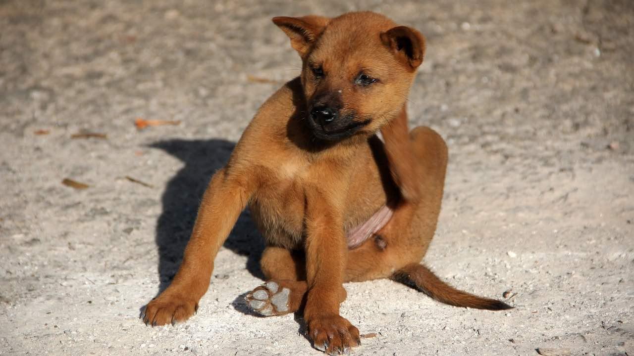 Test allergologici per cani