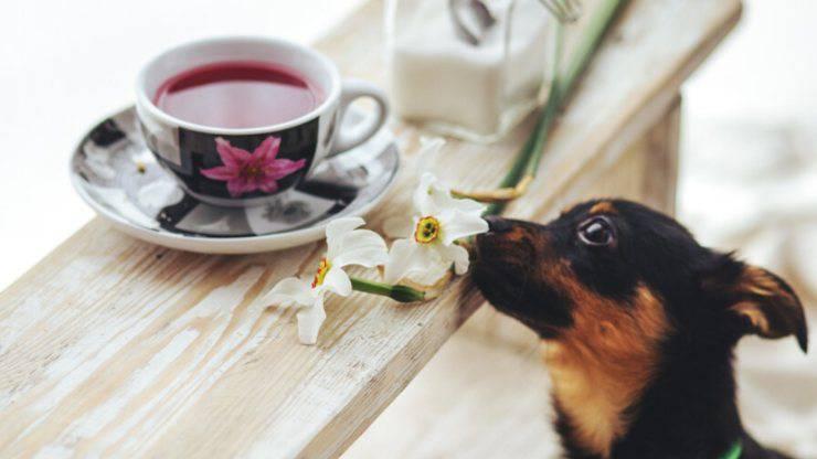 cane con bevanda