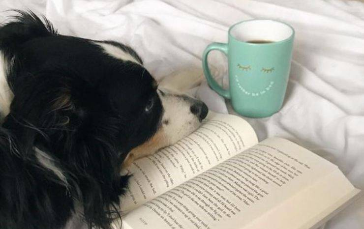 cane con libro