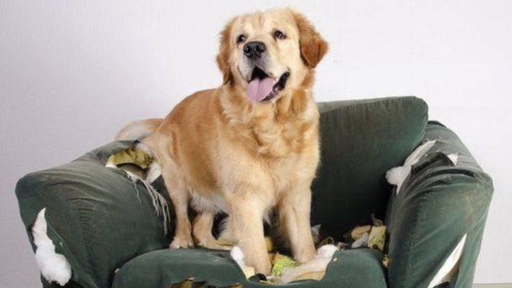 cane distrugge cuscini e divano
