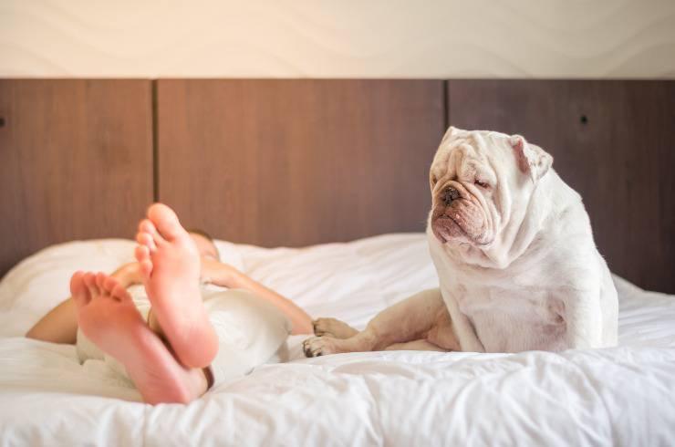 cane dorme in piedi sul letto