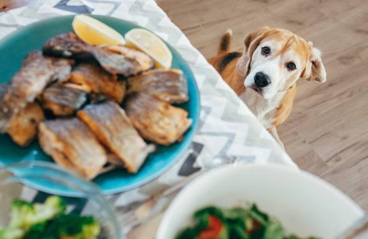 ricette per cani cuccioli