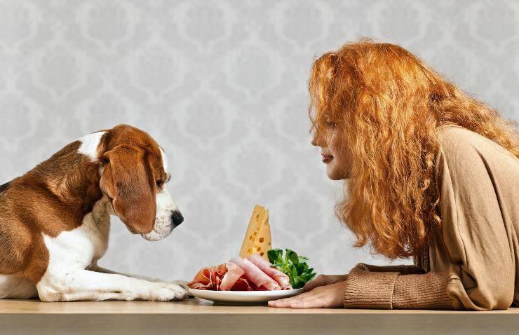 plateau pour chiens et charcuterie