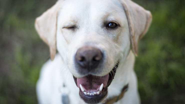 cane fa occhiolino