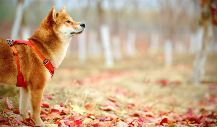 cane al parco con pettorina