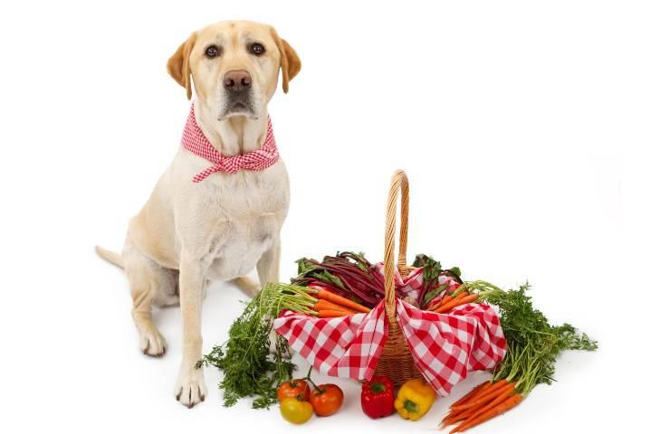 cane e cesto verdure