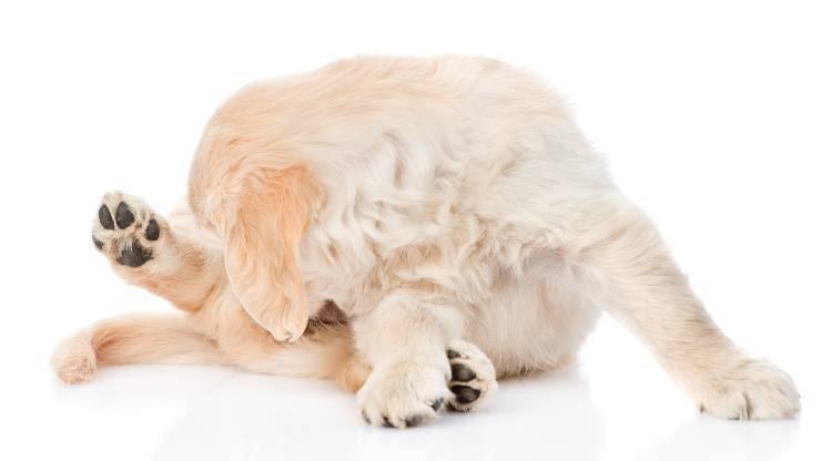 cane si lecca