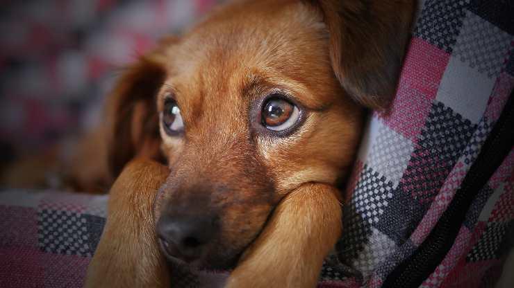 cane sta male sintomi