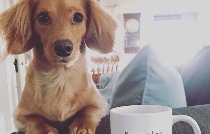 cane su divano con tazza