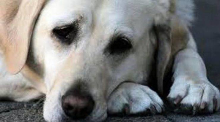 differenze cane randagio domestico