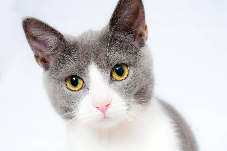 Il gatto e la castrazione