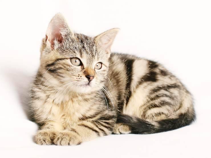 La sterilizzazione della gatta