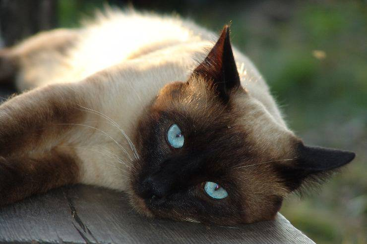 I gatti e il loro fascino