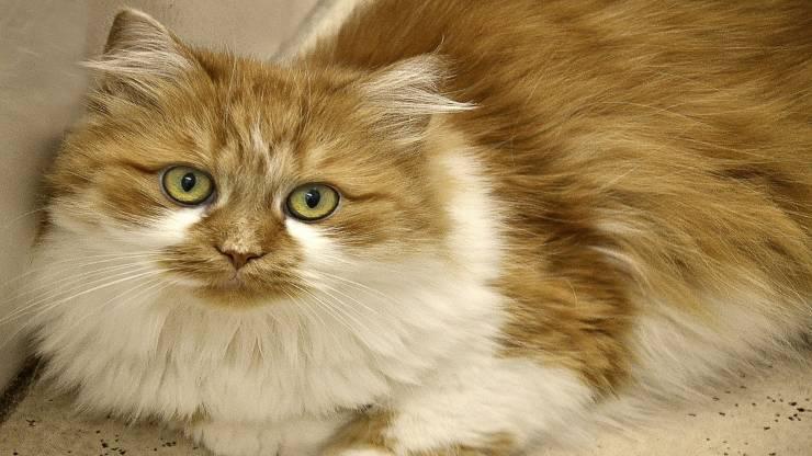 Alimenti utili al pelo del gatto