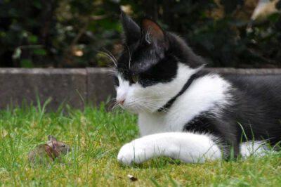 Il gatto e la preda