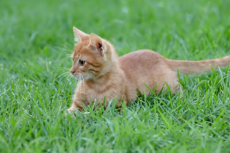 Il felino e i bisogni all'aperto