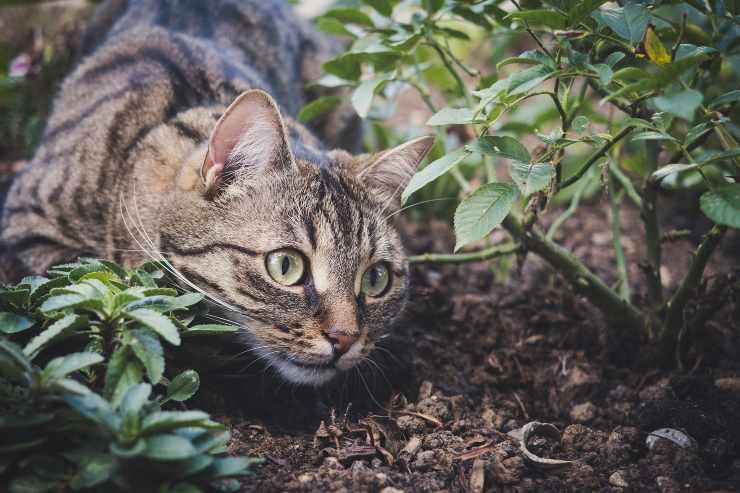 Il gatto fa i bisogni in giardino