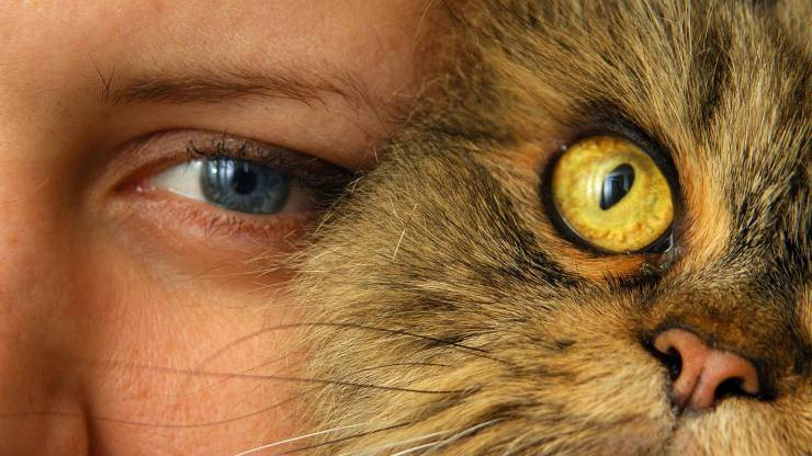 gatto veterinario amore dottore