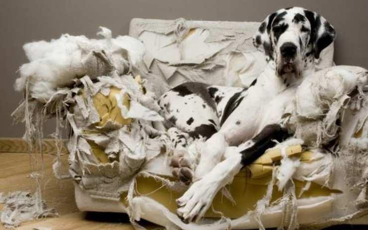 cane comportamento distruttivo cane