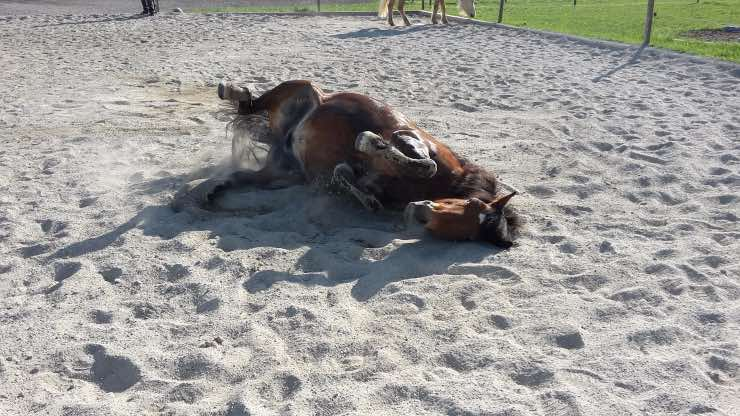 Cavallo sulla sabbia
