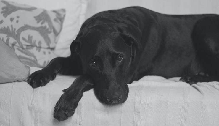 aliments à éviter pour les chiens atteints de cystite