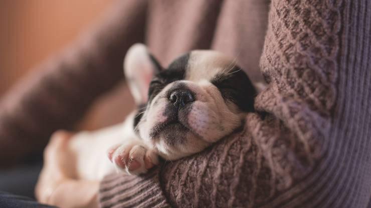 nourriture pour chien atteint de cystite