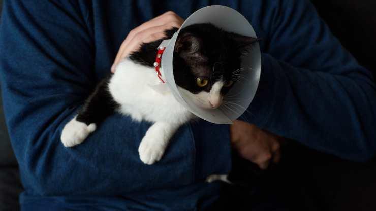 collare elisabettiano gatto