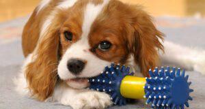 colore preferito cani