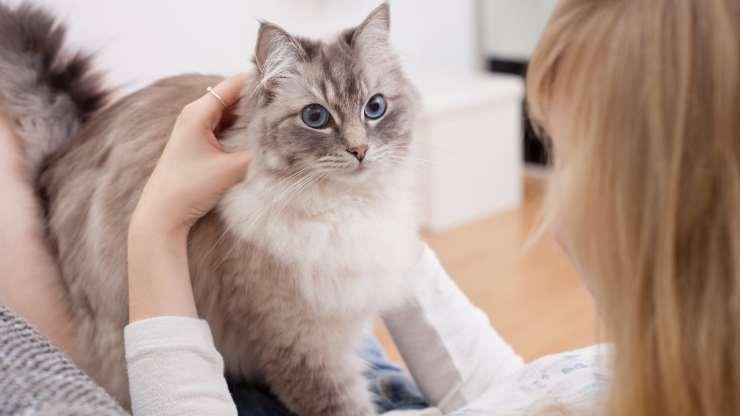 come rendere pelo gatto lucido