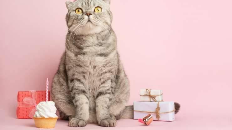 organizzare festa compleanno gatto