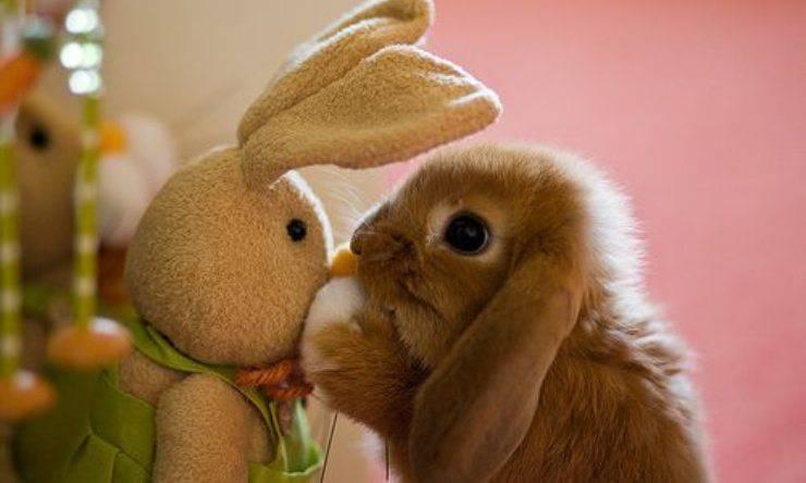 coniglio con pupazzo