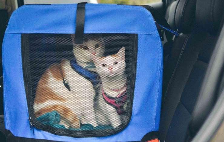 consigli su come trasportare gatto in auto