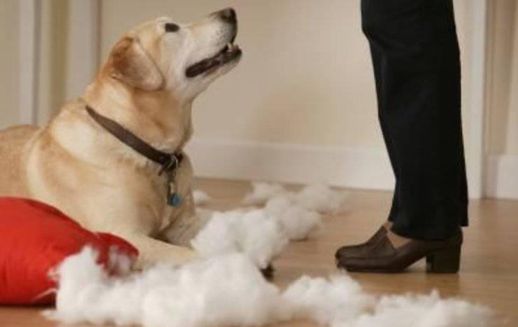 consigli utili per cane distruttivo