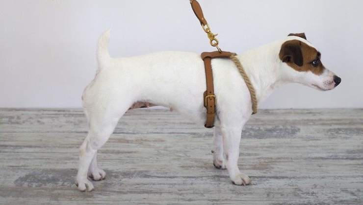 consigli utili pettorina cane