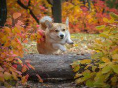 Il cane e l'osteoporosi