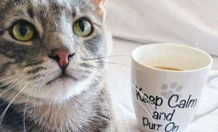cosa fare se il gatto beve tè