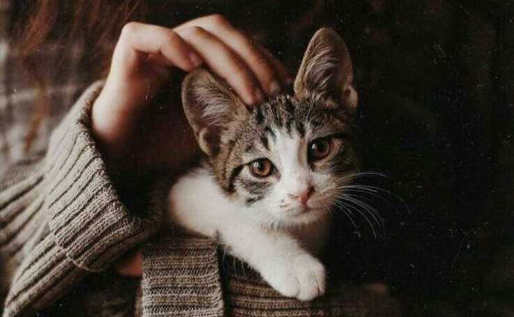 curare il gatto