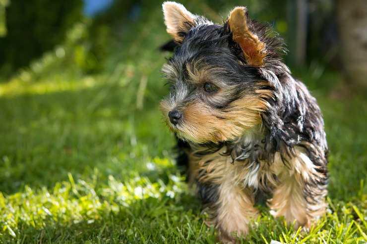 Cani più adorabili