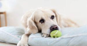 Il cane e la tristezza