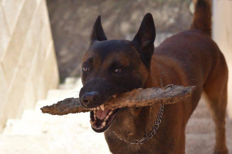 Pezzo di legno in bocca