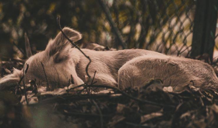 Cane solo nell'indifferenza (Foto Pixabay)