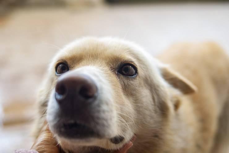 I cani e le loro malattie