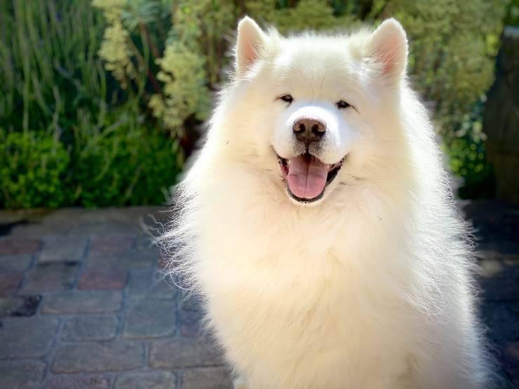 Cani più belli