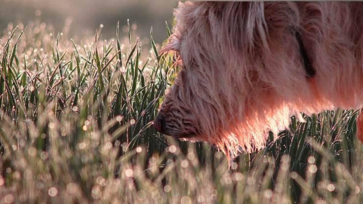 cane annusa insistentemente