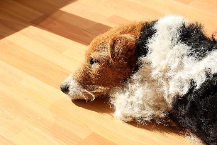 Il cane anziano è stanco