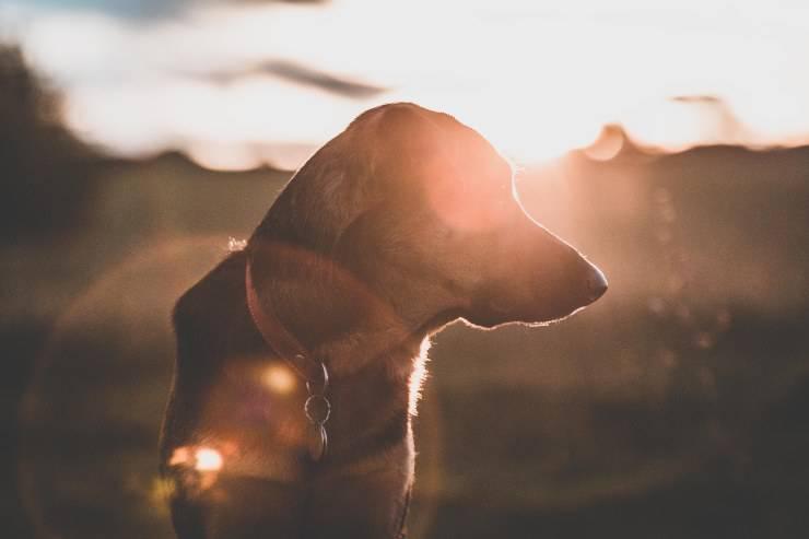 Cane e il piacere del sole